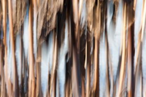 abstract photo of grass in winter